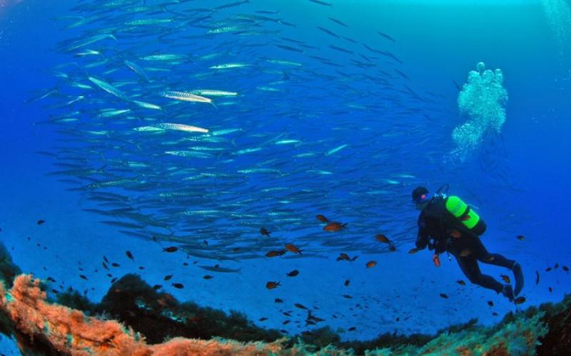 Plongée à Majorque : tous les meilleurs centres de plongée à Majorque dans les îles Baléares