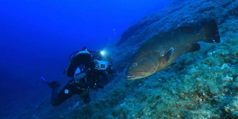 Plongée à Minorque : tous les meilleurs centres de plongée à Minorque dans les îles Baléares